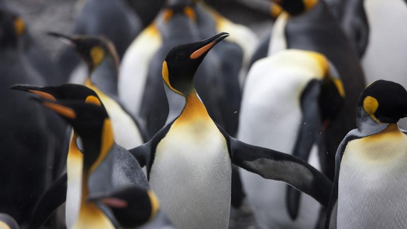 Link Building after Penguin